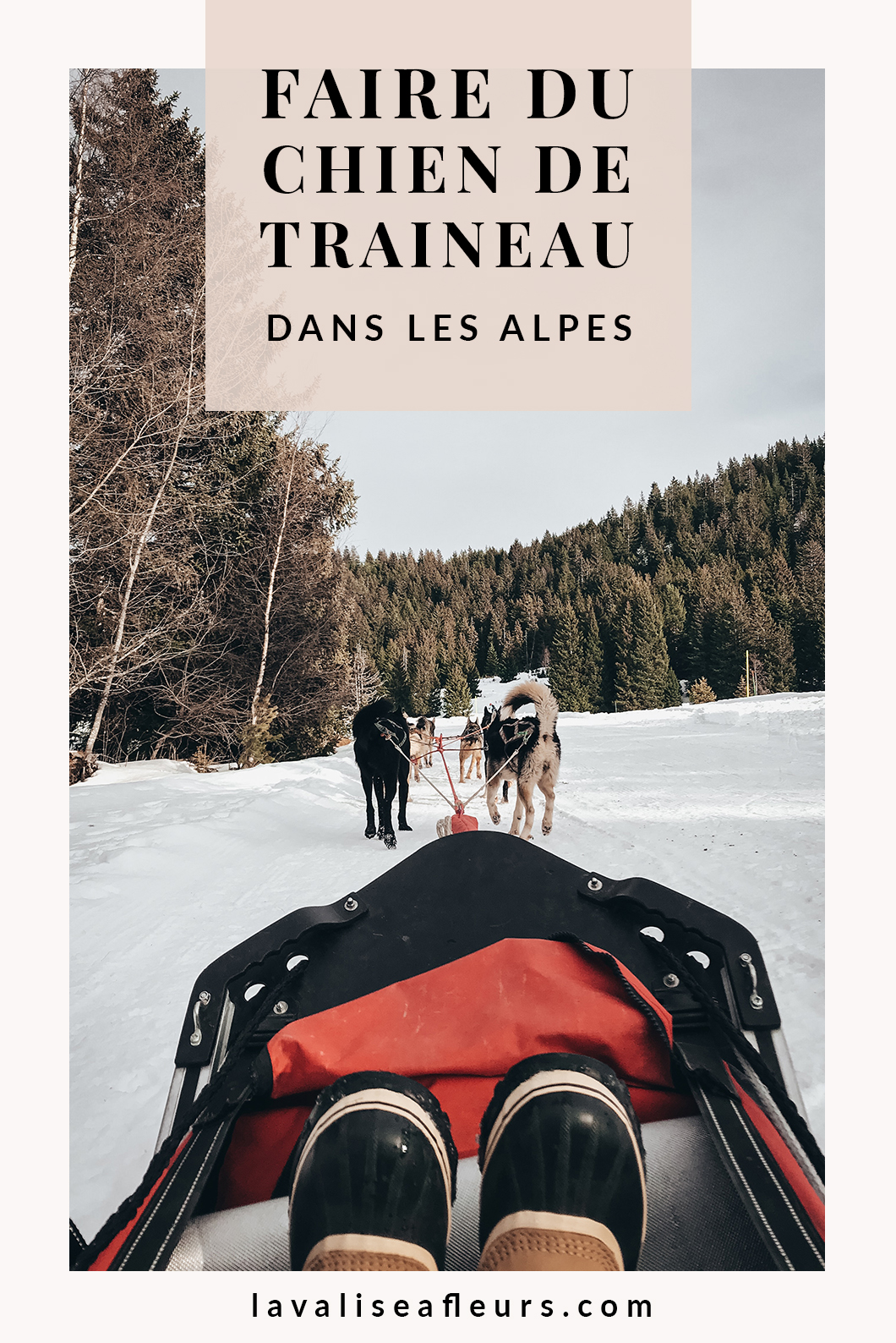 Faire du chien de traineau dans les Alpes