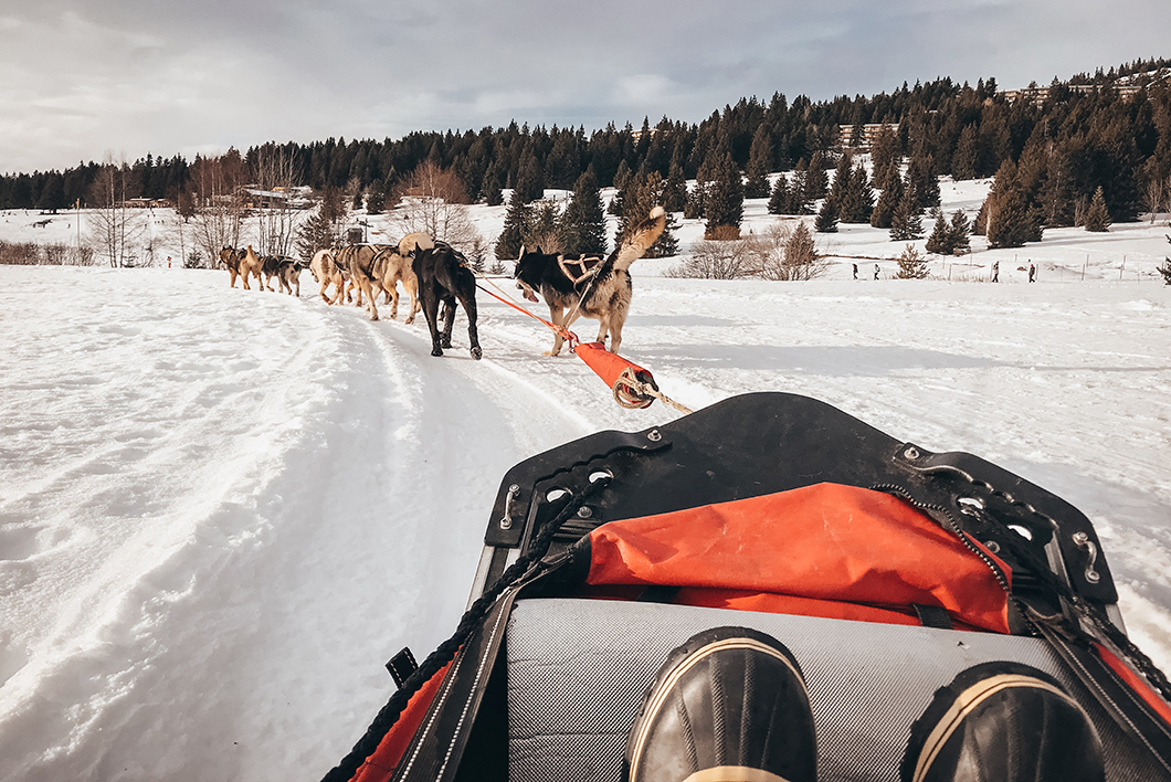Balade en chien de traineau - Activité insolite dans les Alpes