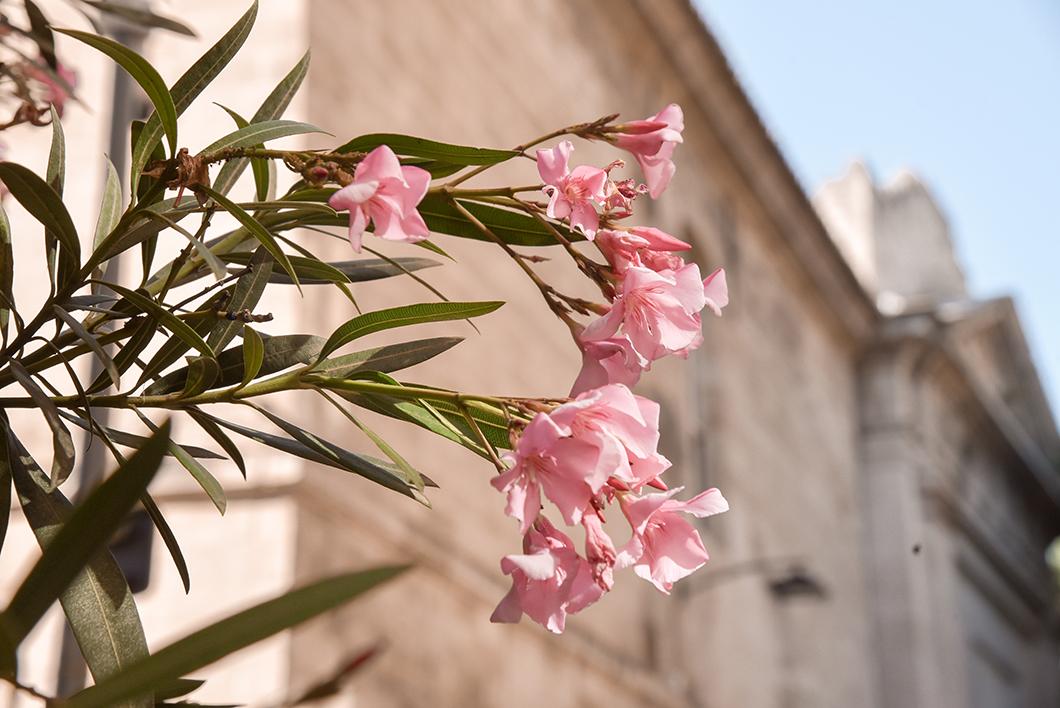 Un week end à Avignon