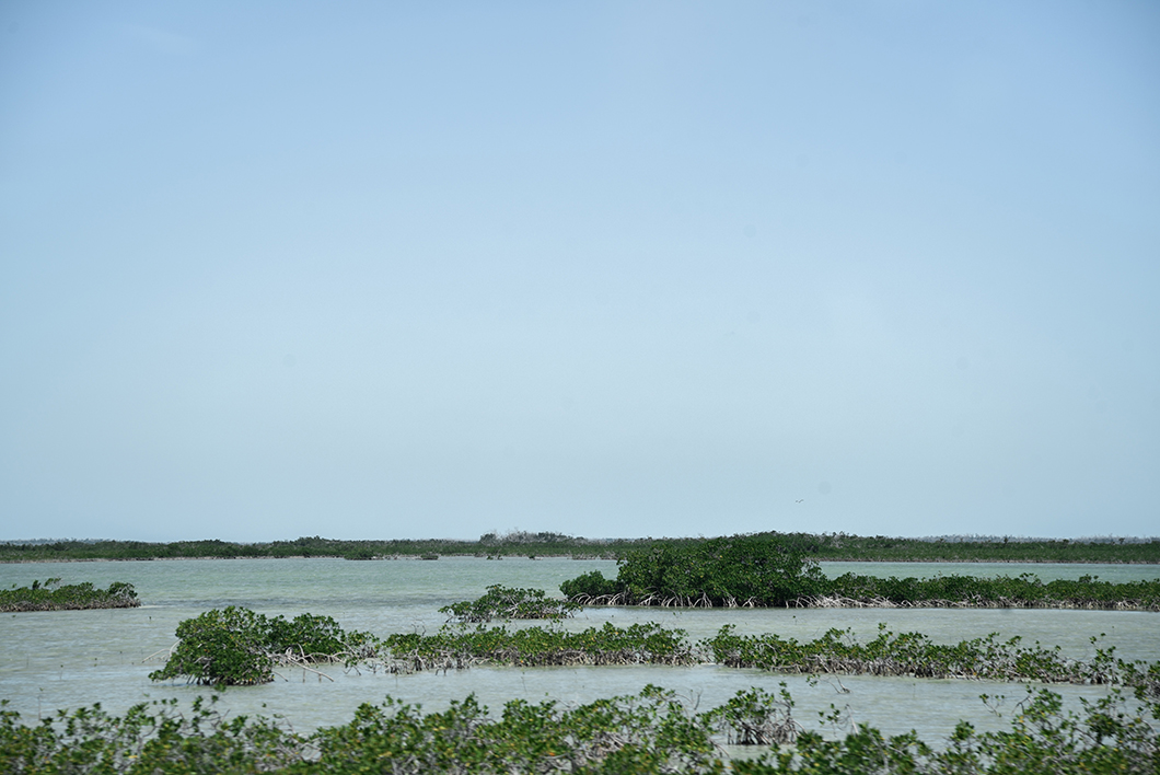 Mangrove dans les Keys