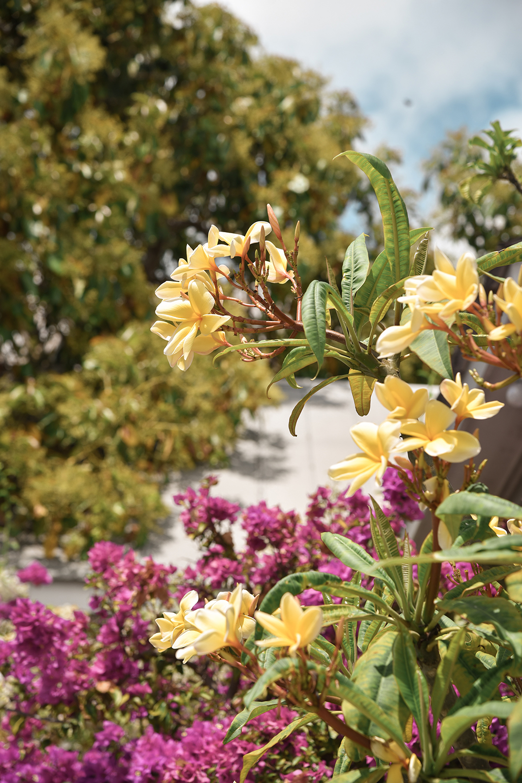 Les fleurs de Key West
