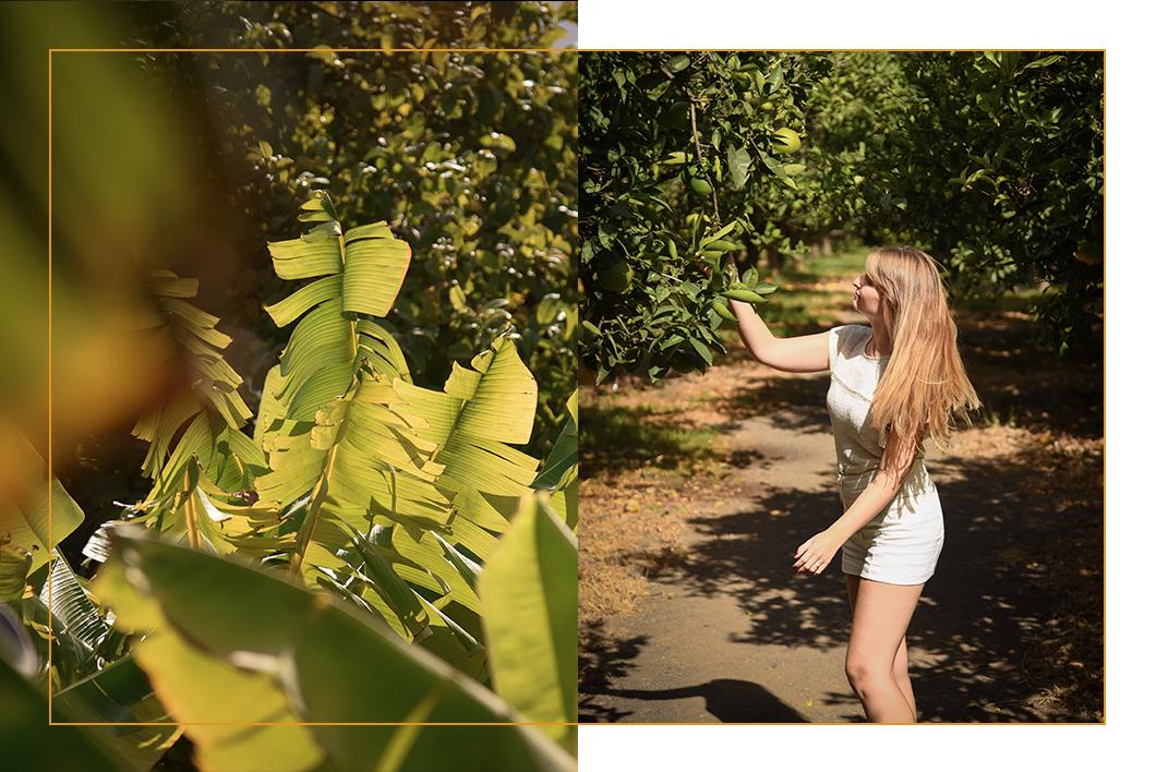 Les plantations de Finca la Laja