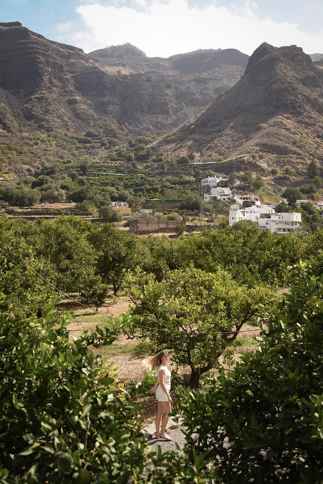 Les arbres à fruits de Finca la Laja