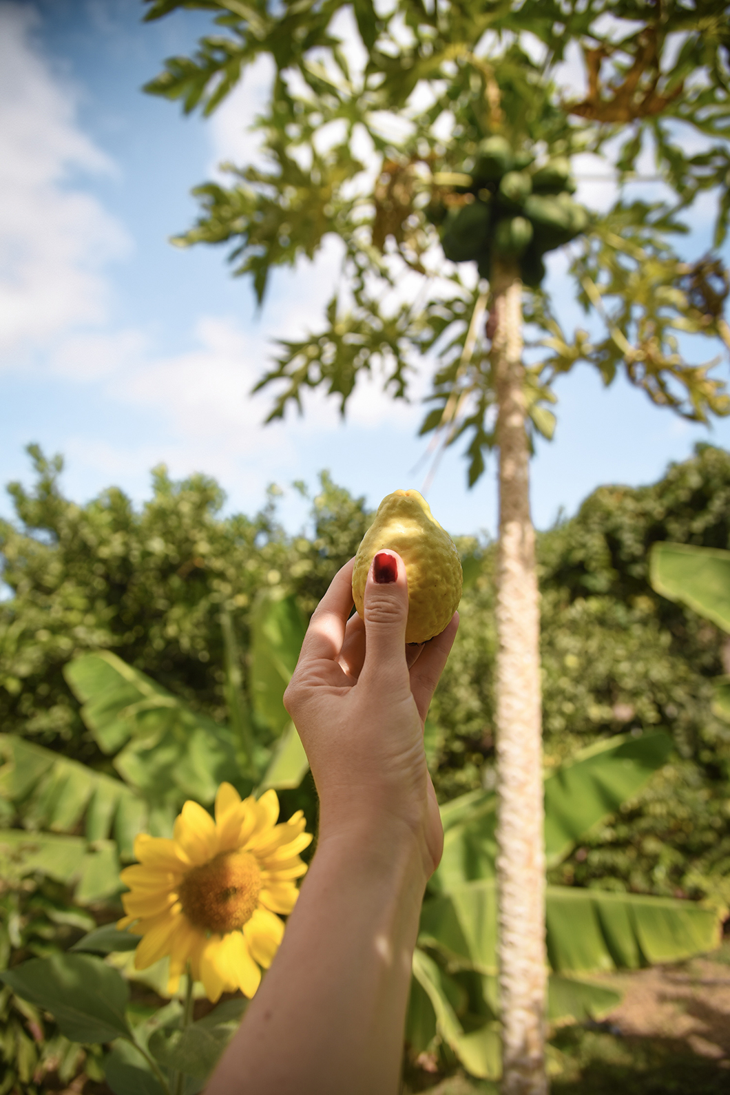 Les fruits tropicaux de Finca la Laja