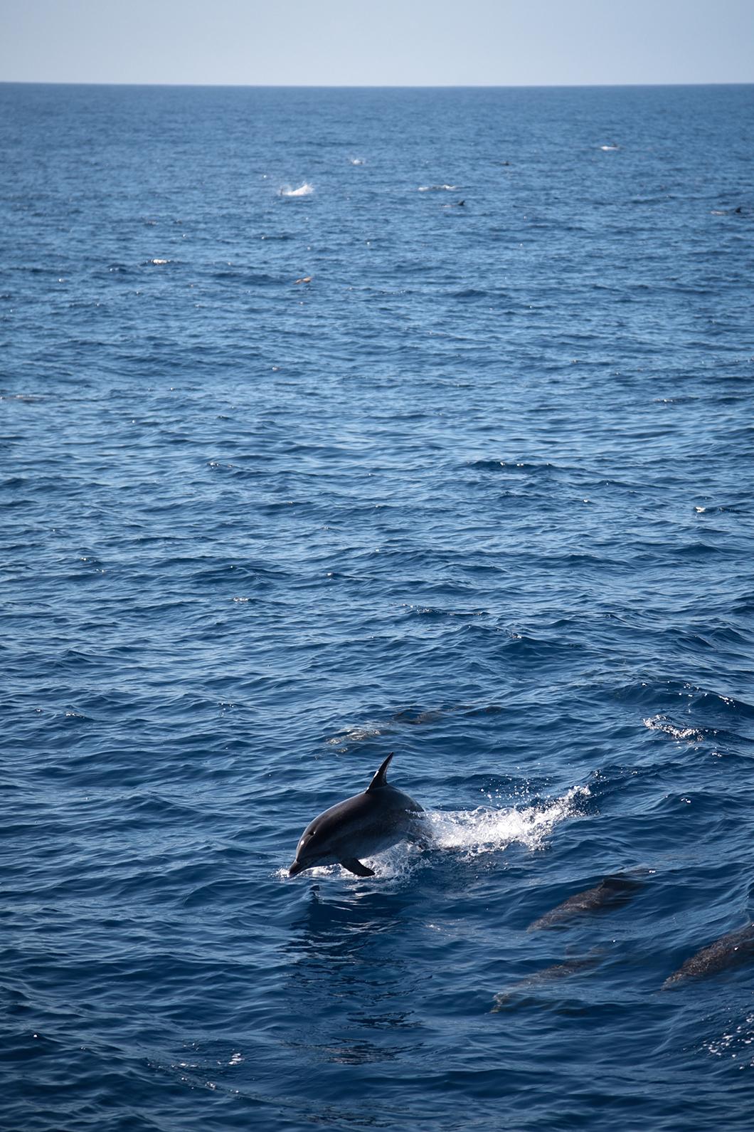 Voir les dauphins avec Spirit of the sea