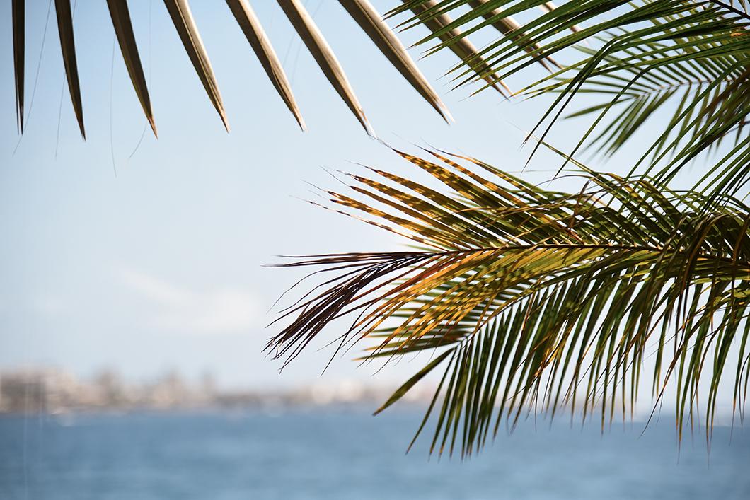 Anfi beach et ses palmiers