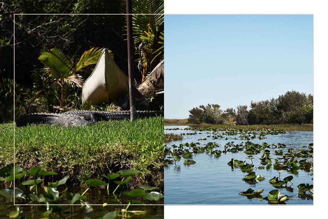 Visiter les Everglades - Road trip en Floride