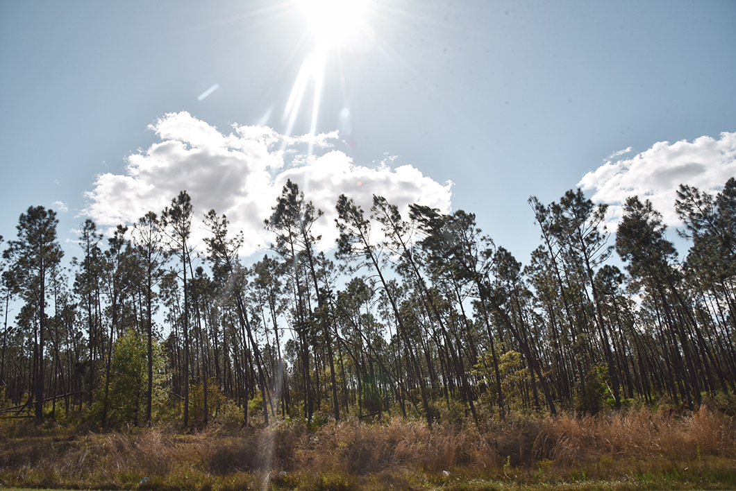 Tallahassee en Floride