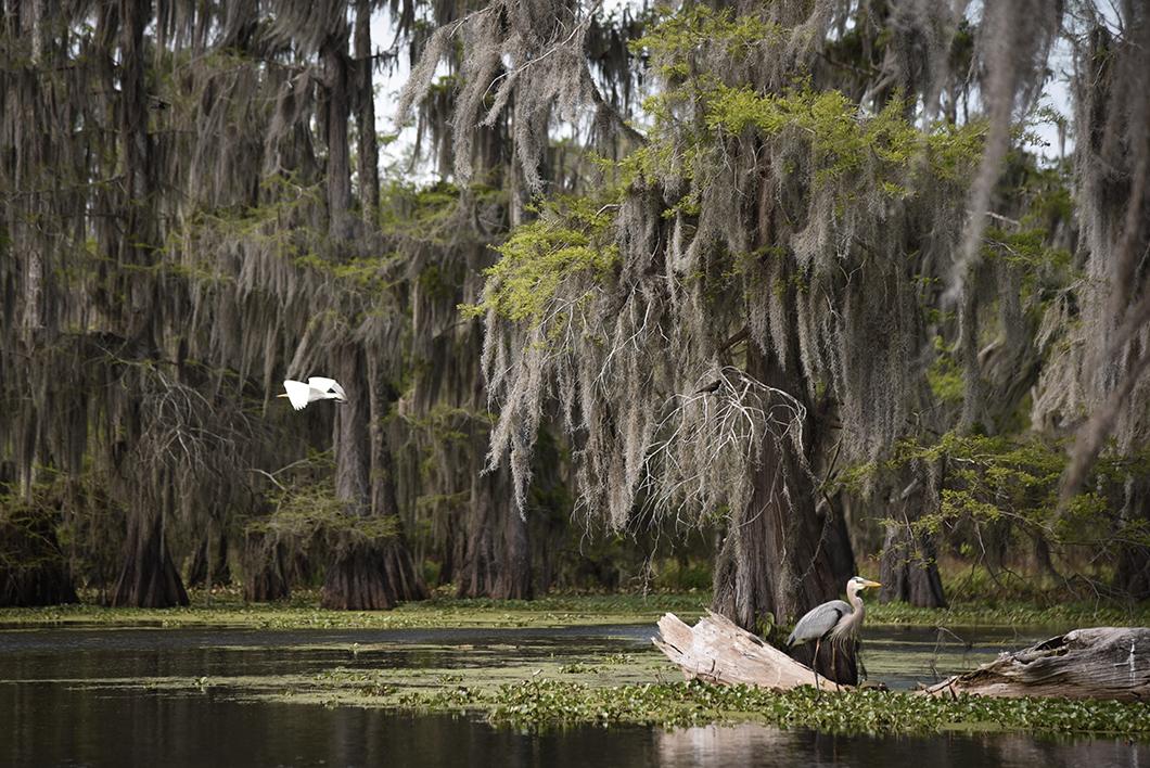 Que faire en Louisiane ? Bateau au lac Martin près de Layafette