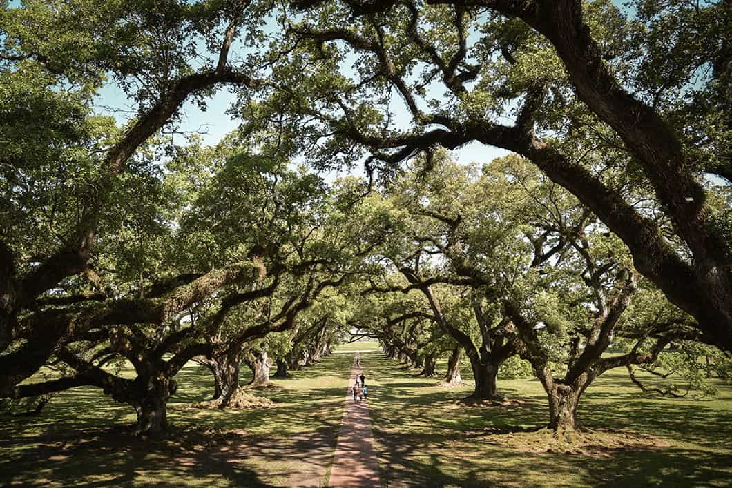 Visiter Oak Alley Plantation