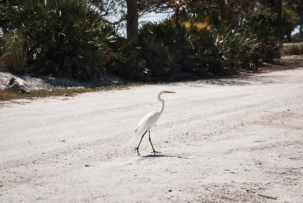 Observer les oiseaux de Sanibel Island