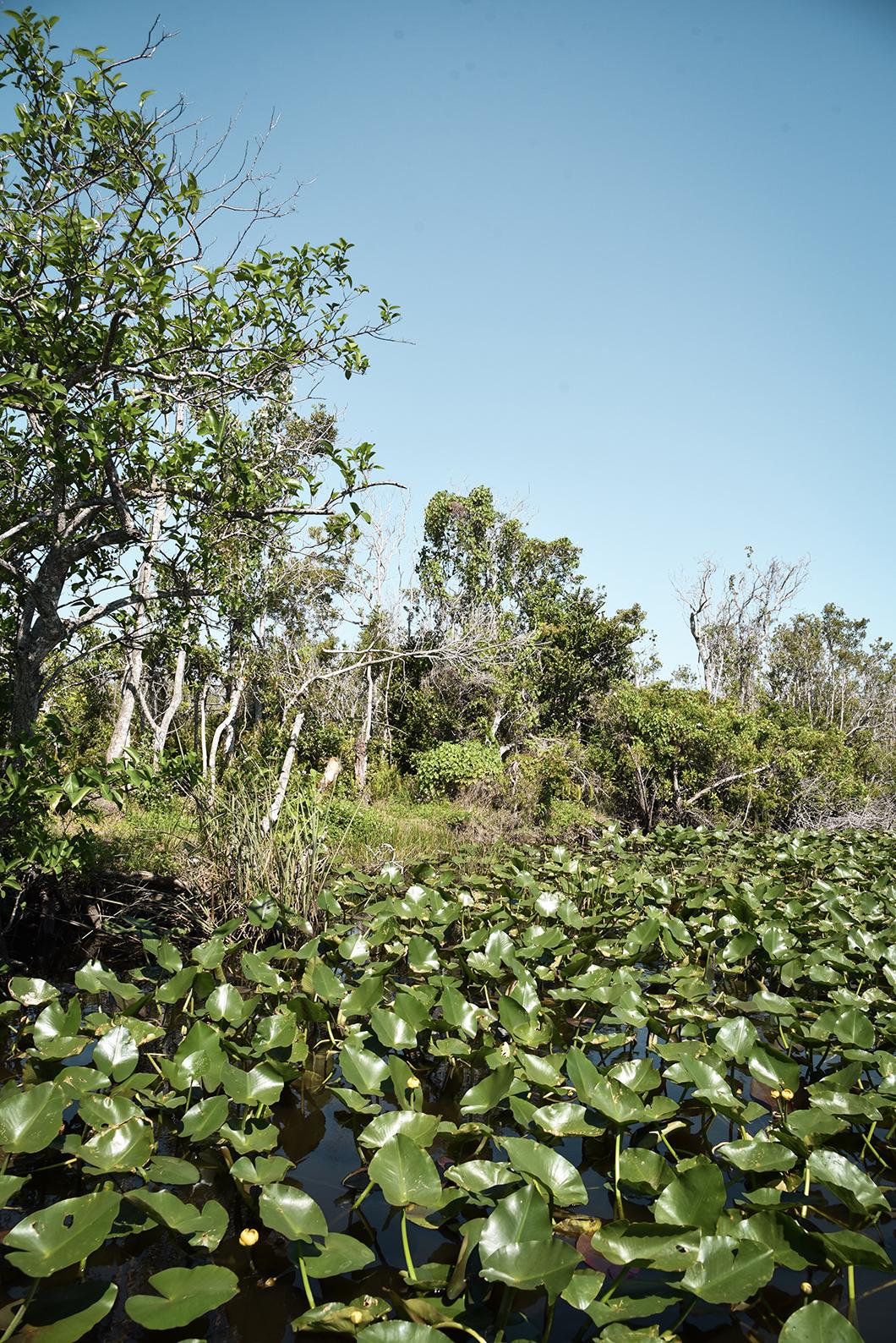 Que faire dans le Parc des Everglades ? Visiter en bateau