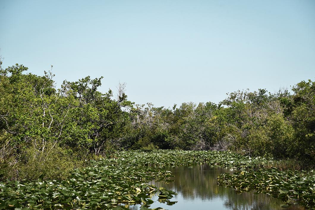 Que faire lors d'une journée dans les Everglades ? balade en airboat