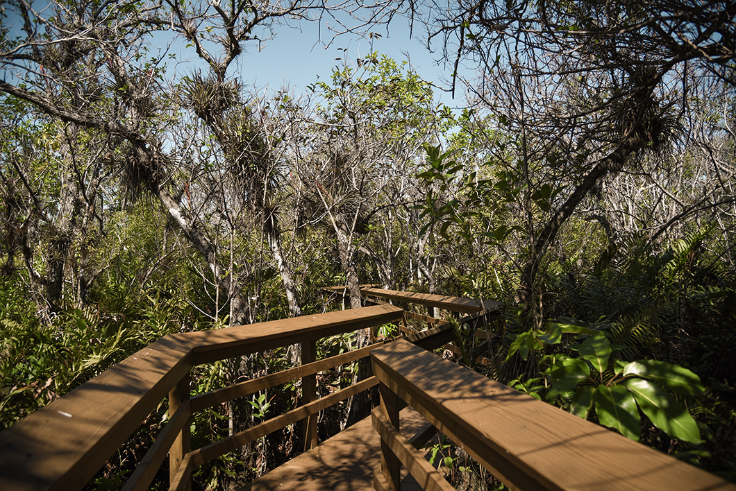 Où randonner dans le parc des Everglades ?