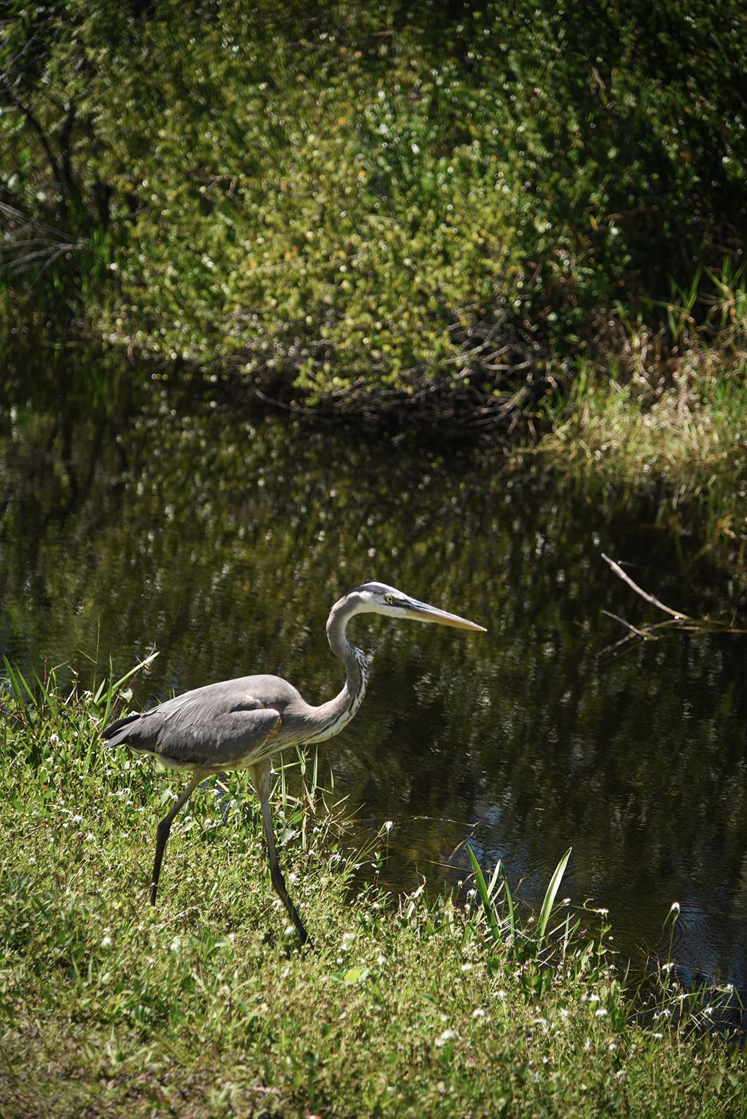 Observer les oiseaux du parc des Everglades en Floride