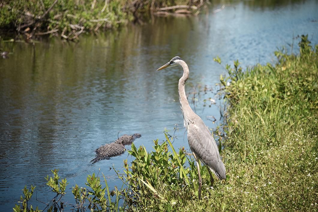 Où observer les animaux dans le parc des Everglades ? La Shark Valley