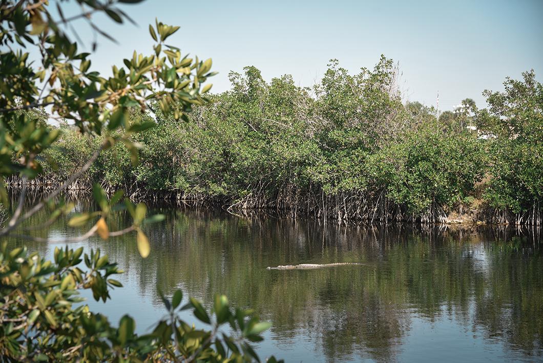 Randonnée au Kirby Storter Roadside Park dans le parc des Everglades