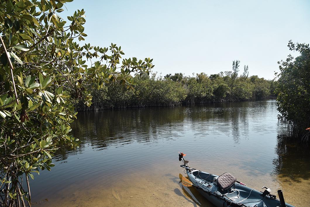 Découvrir le parc des Everglades en Floride