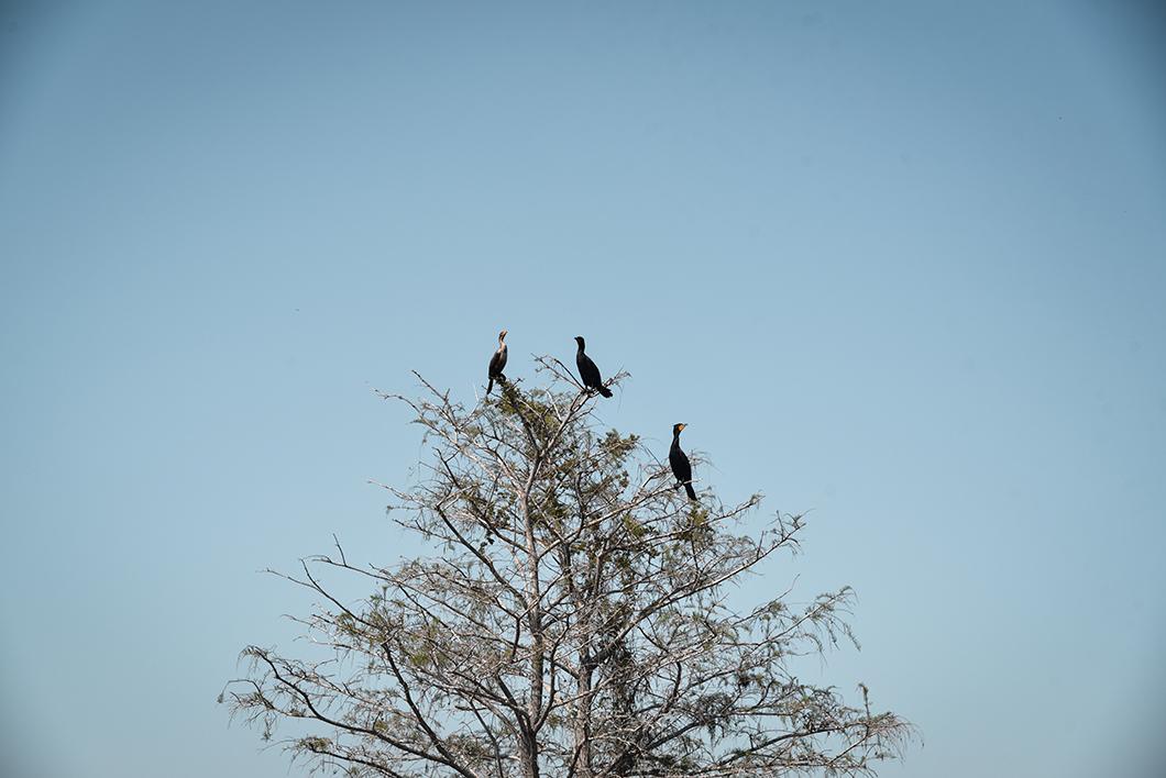 Kirby Storter Roadside Park dans les Everglades en Floride