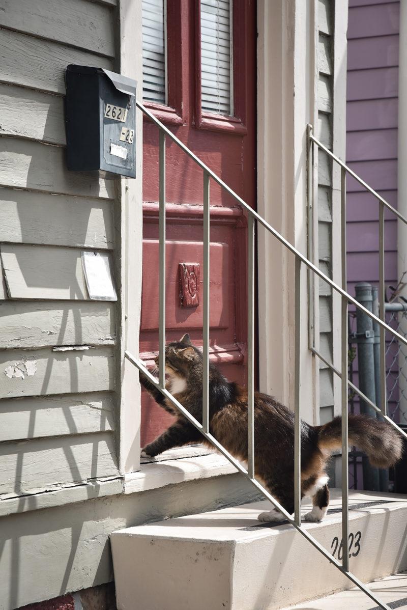 Spot photogénique à la Nouvelle Orléans : Faubourg Marigny