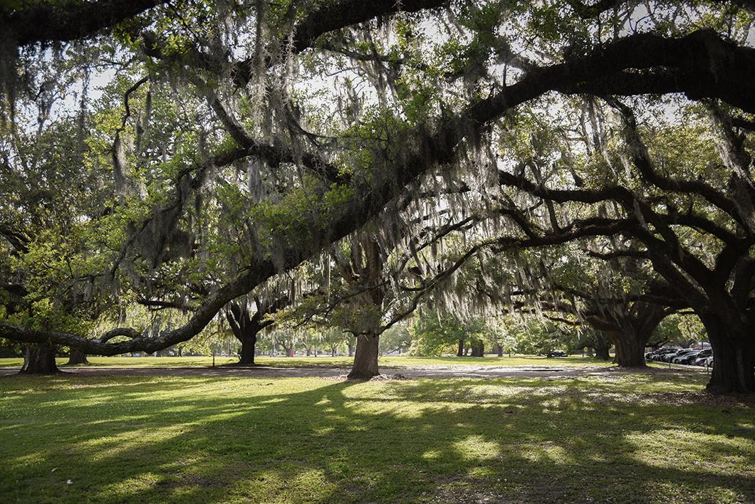 Aller au City Park à la Nouvelle Orléans
