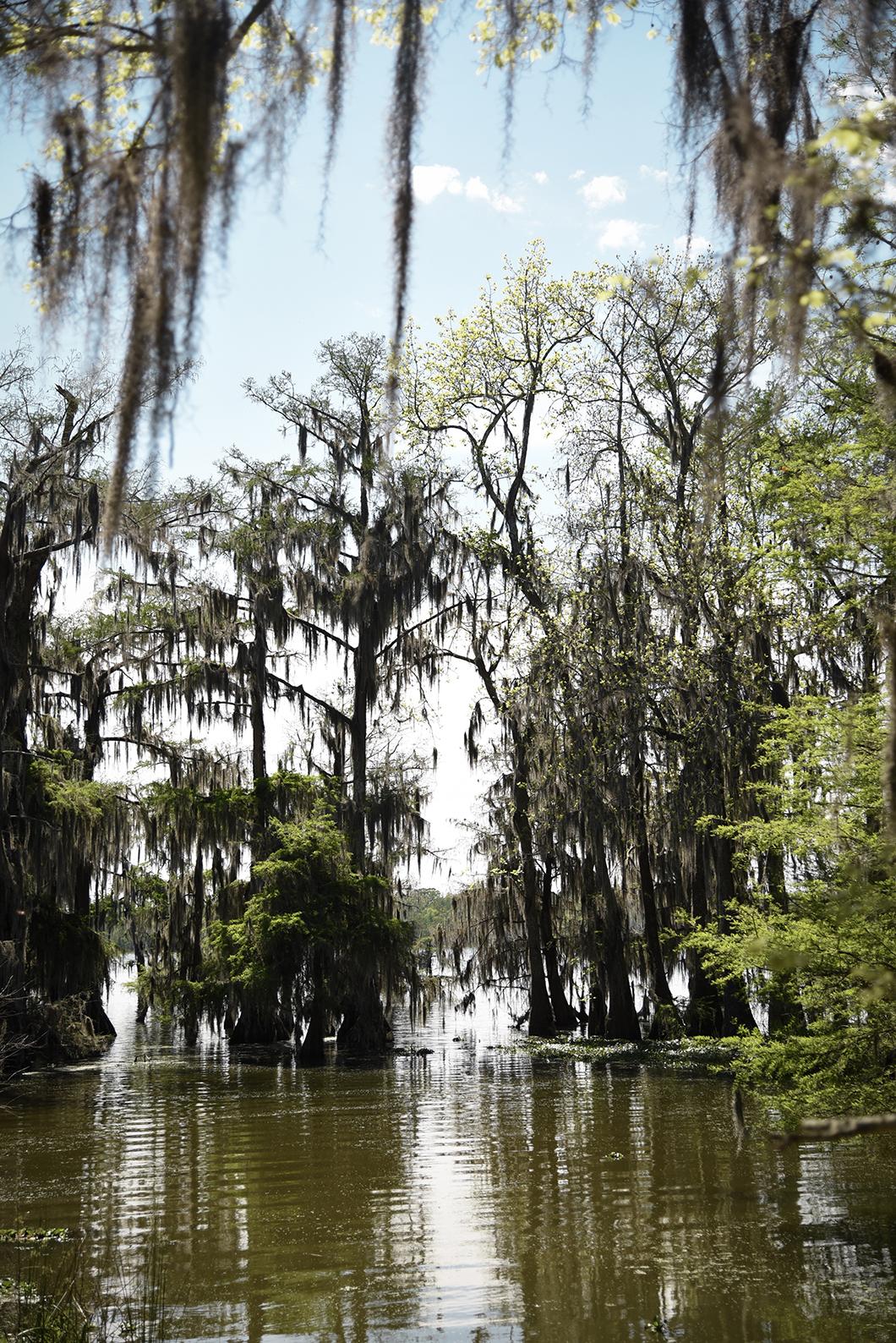 Découvrir les bayous, roadtrip en Louisiane