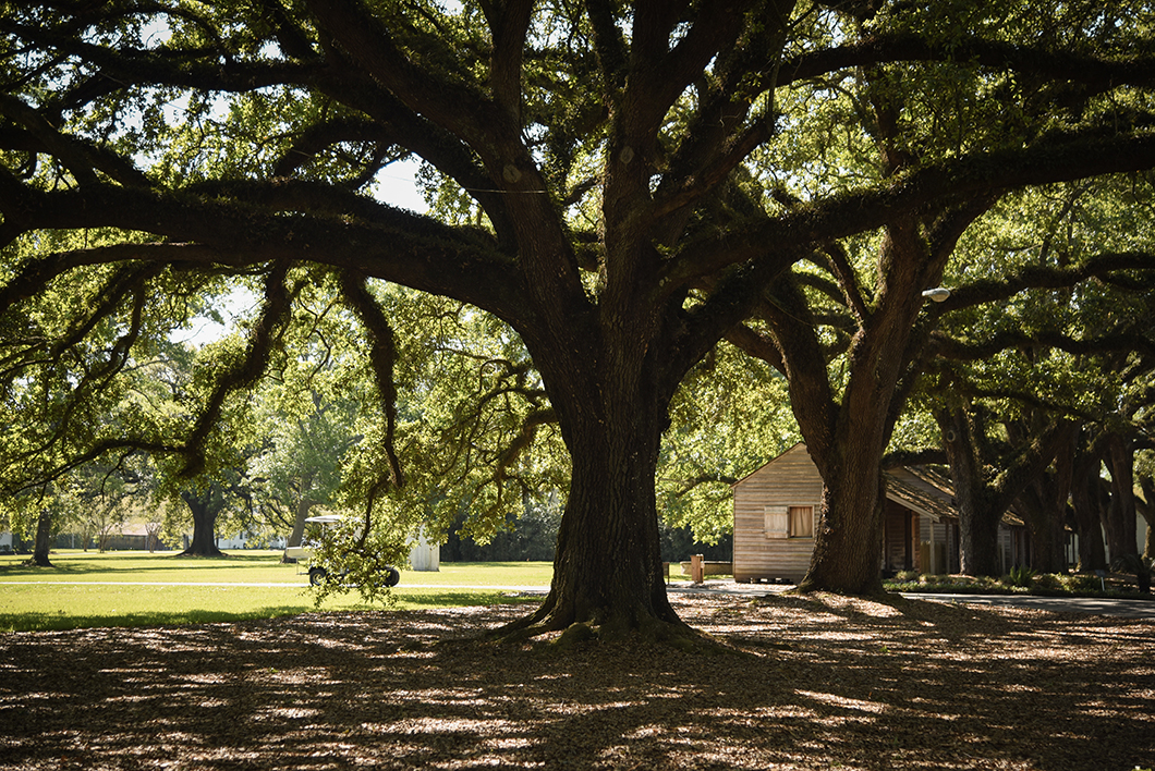 Découverte de la Oak Alley Plantation en Louisiane