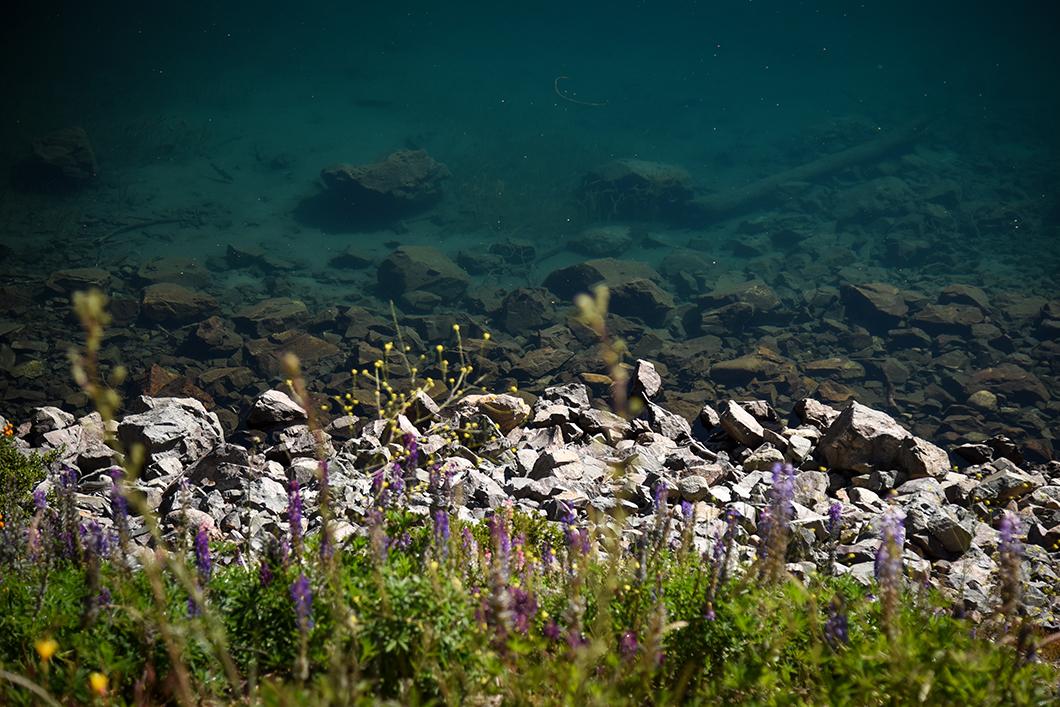 Route des 7 lacs à Bariloche