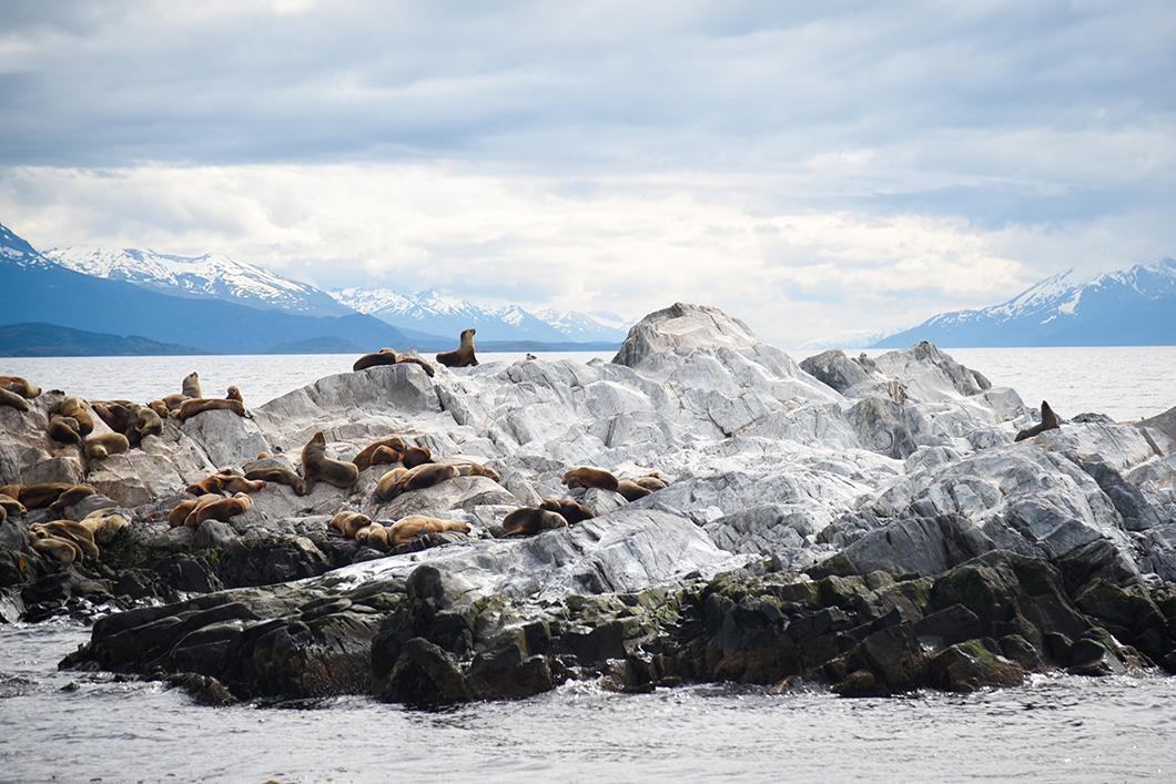 Lions de mer à Ushuaia
