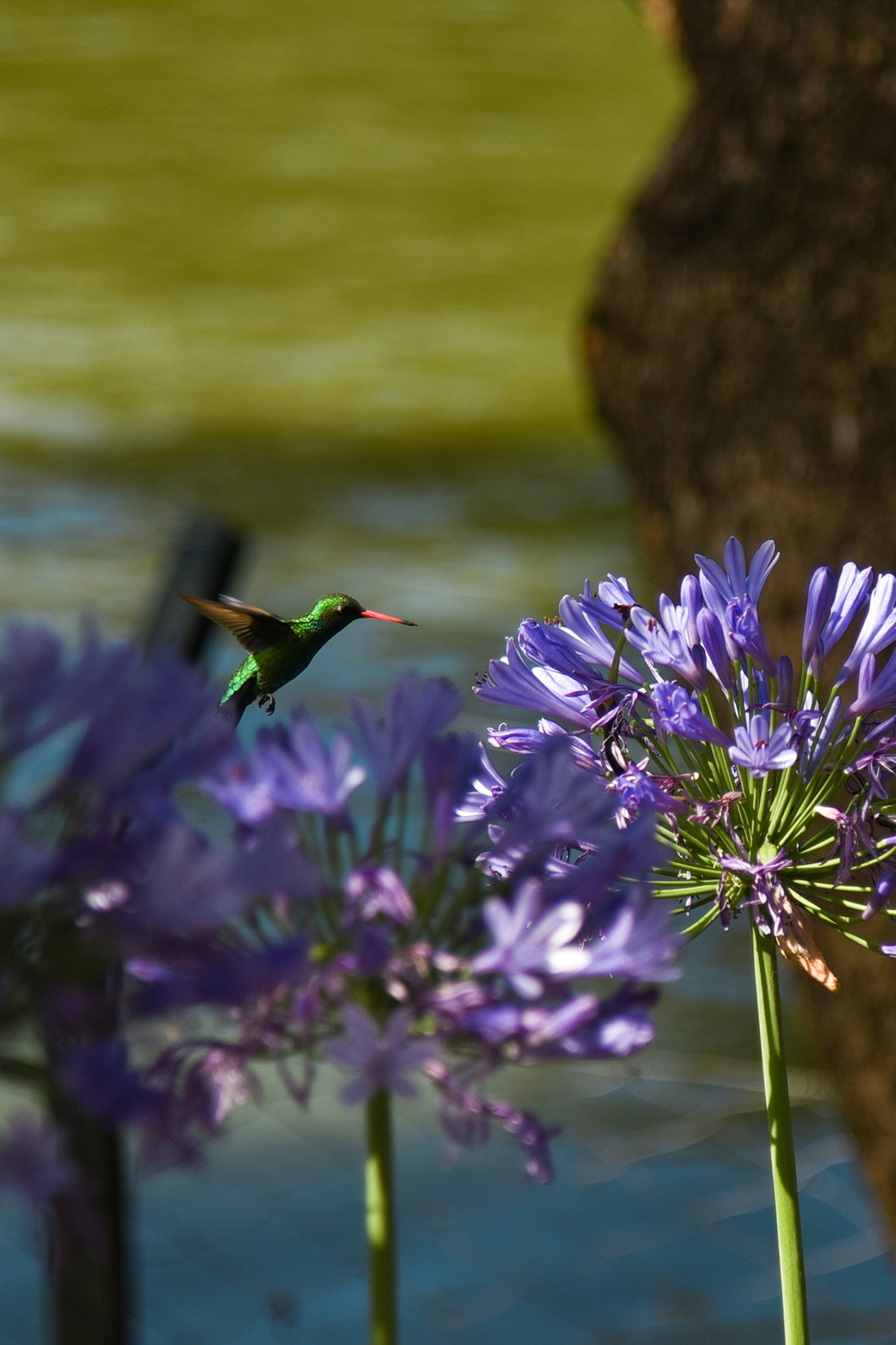 Découvrir Palermo Botanico