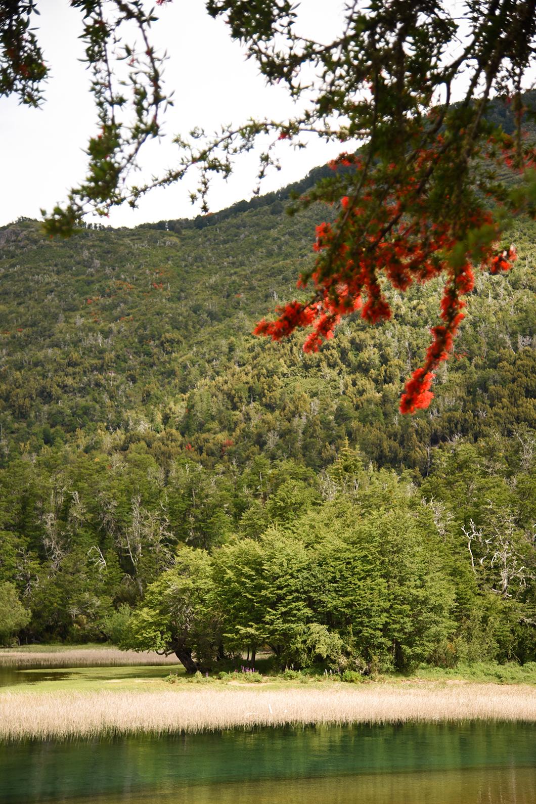 Om randonner à Bariloche ? Route des 7 lacs