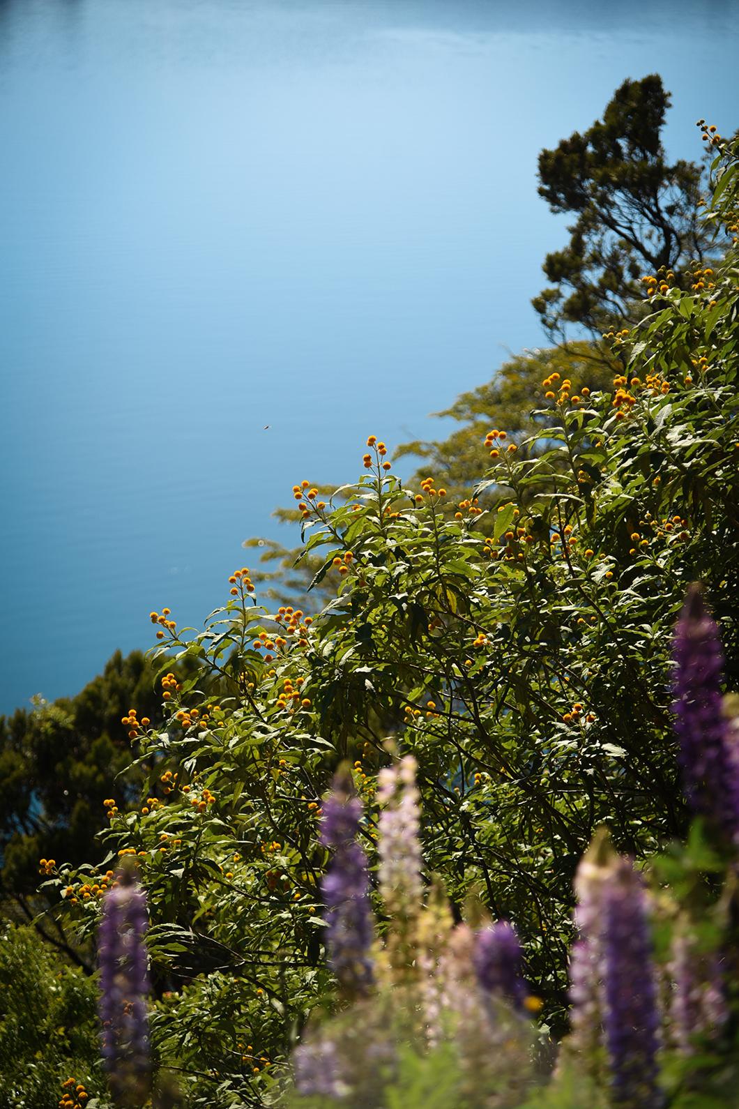 La région fleurie de Bariloche