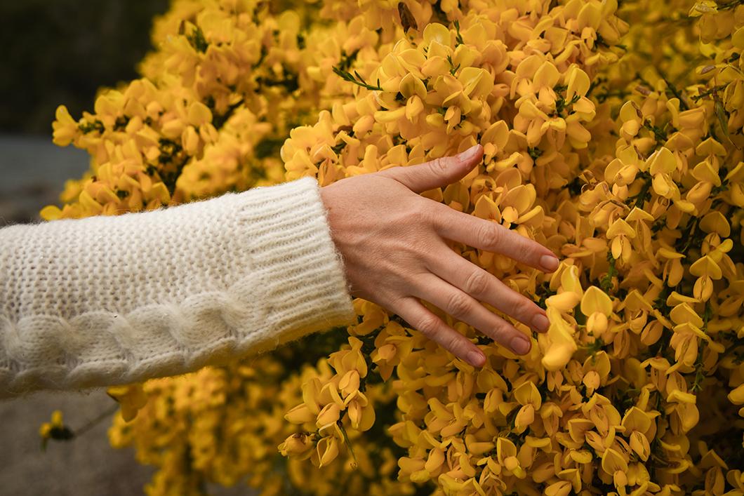 Les jolies fleurs de Bariloche