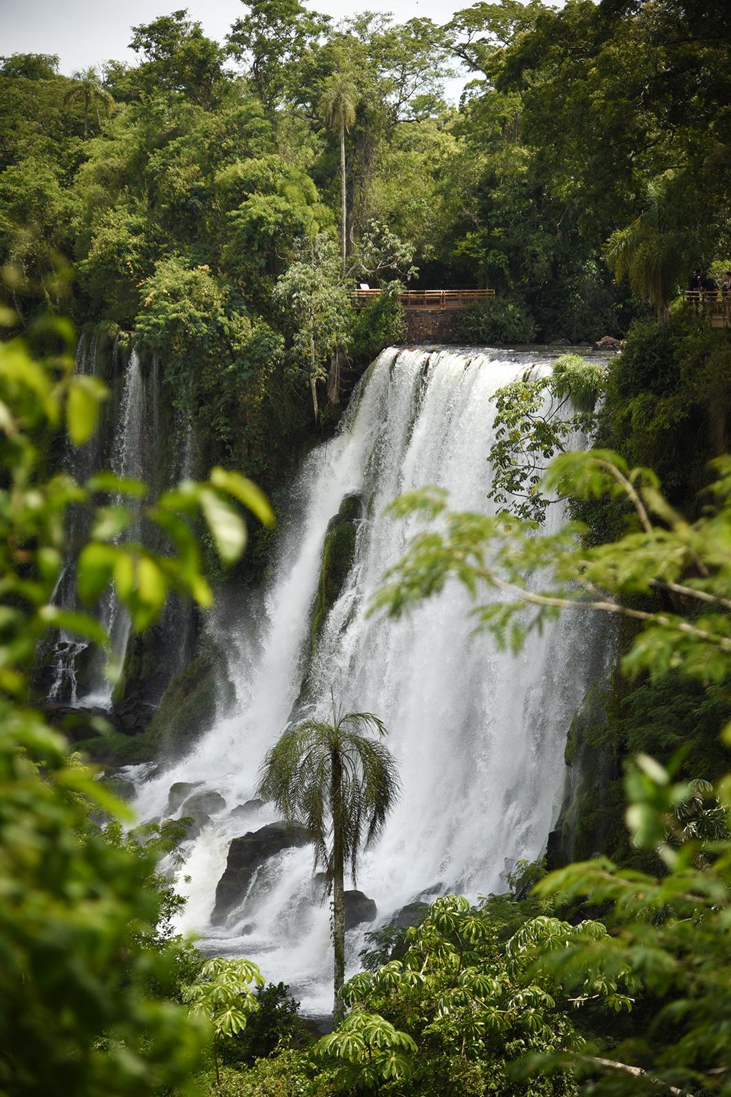 Randonnée dans le parc national d'Iguazu