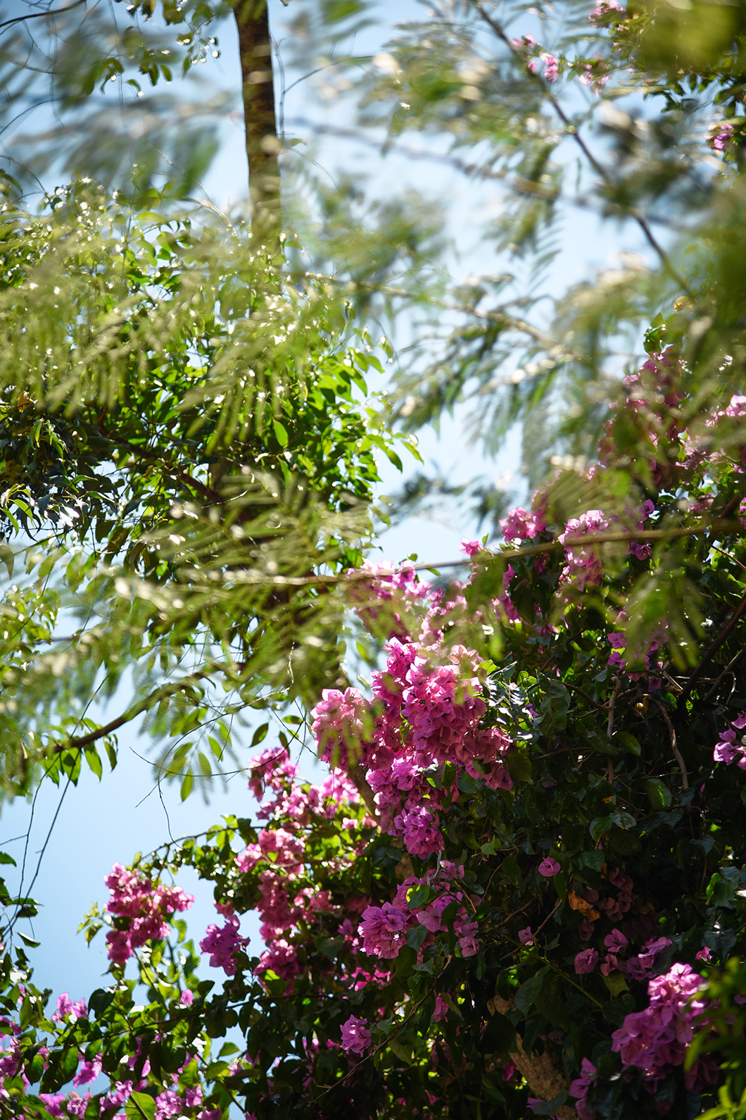 Parque das Aves à Iguazu