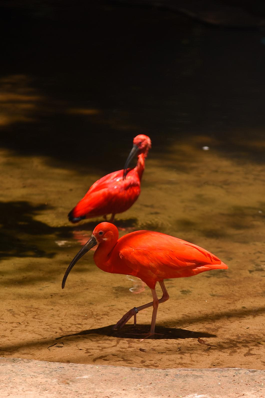 Découvrir le Parque das Aves à Iguazu