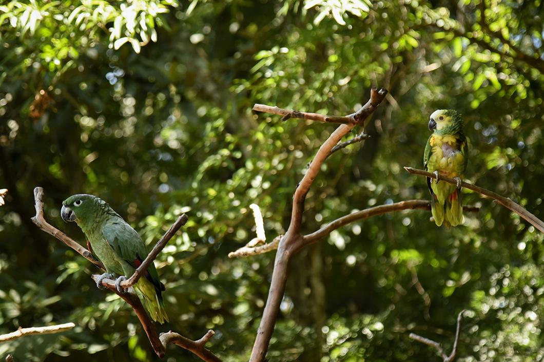 Parc aux oiseaux d'Iguazu