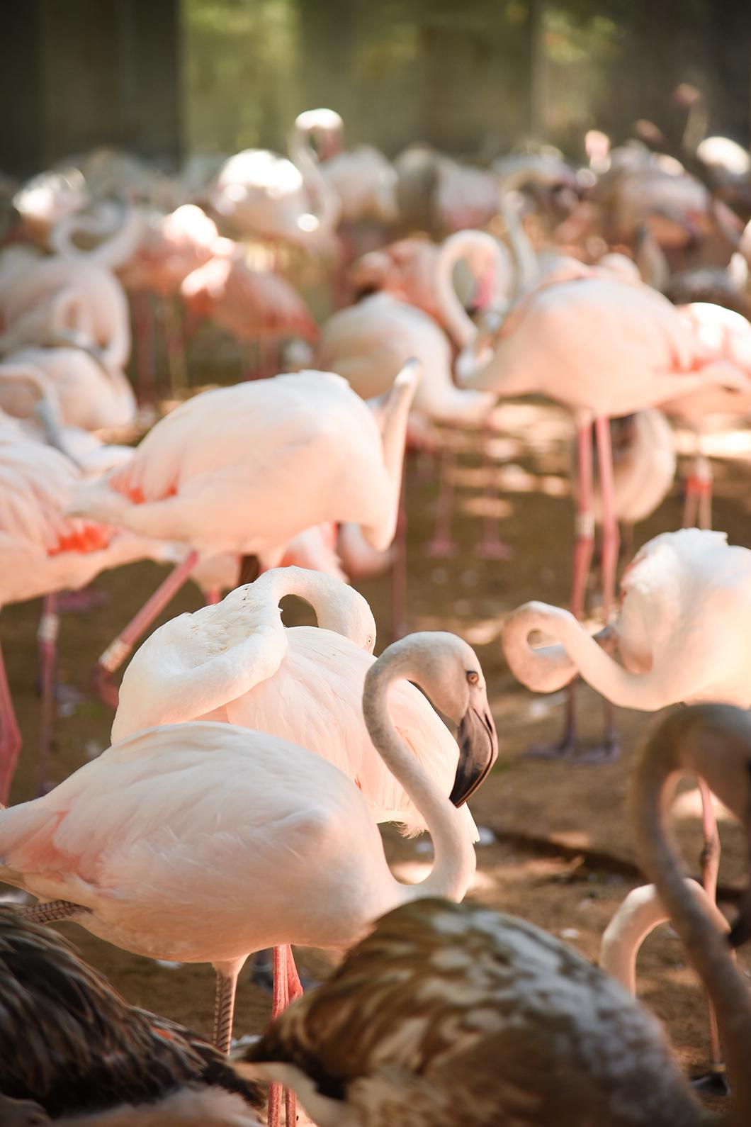 Découvrir les oiseaux du Parque das Aves