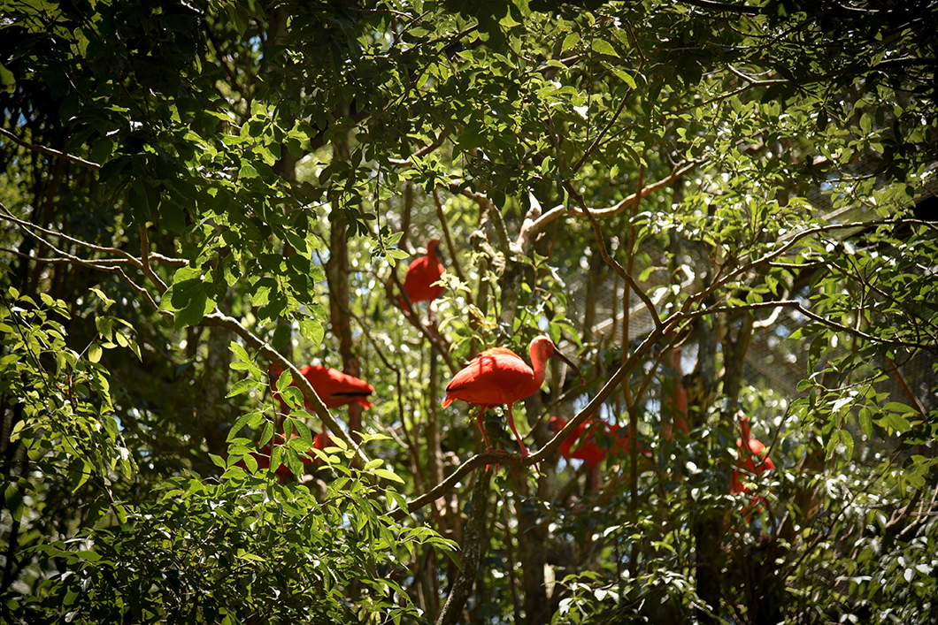 Que faire à Iguazu au Brésil ? Découvrir le Parque das Aves