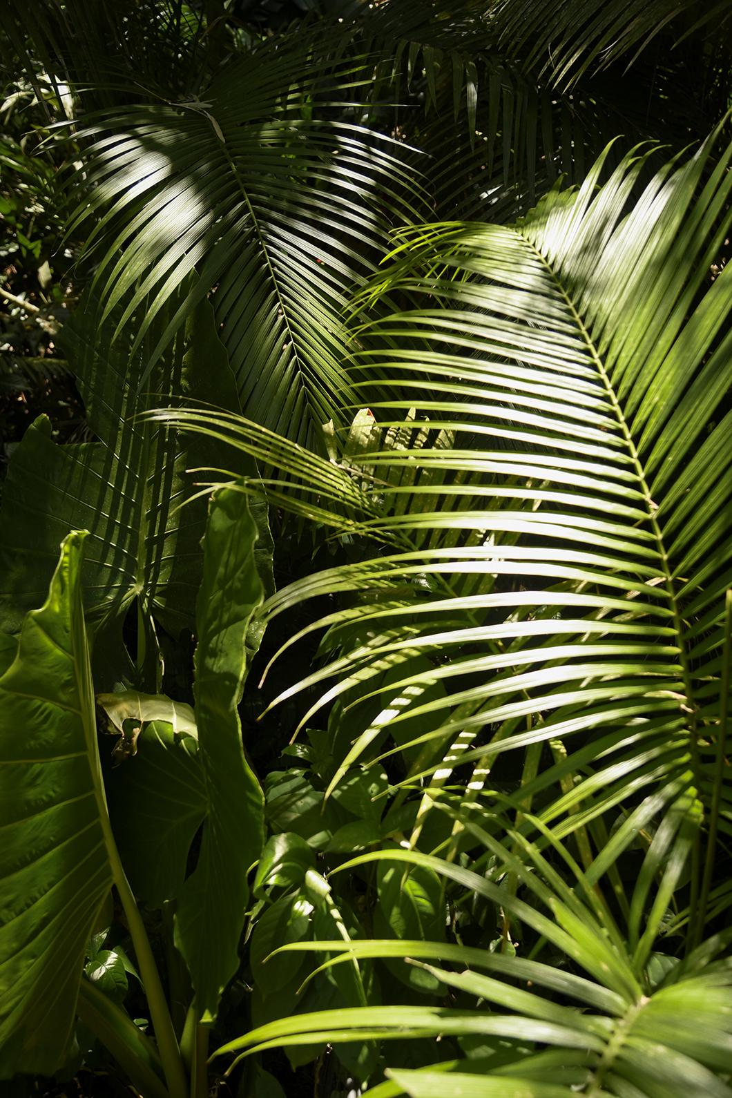 Parque das Aves, visite à Iguazu au Brésil