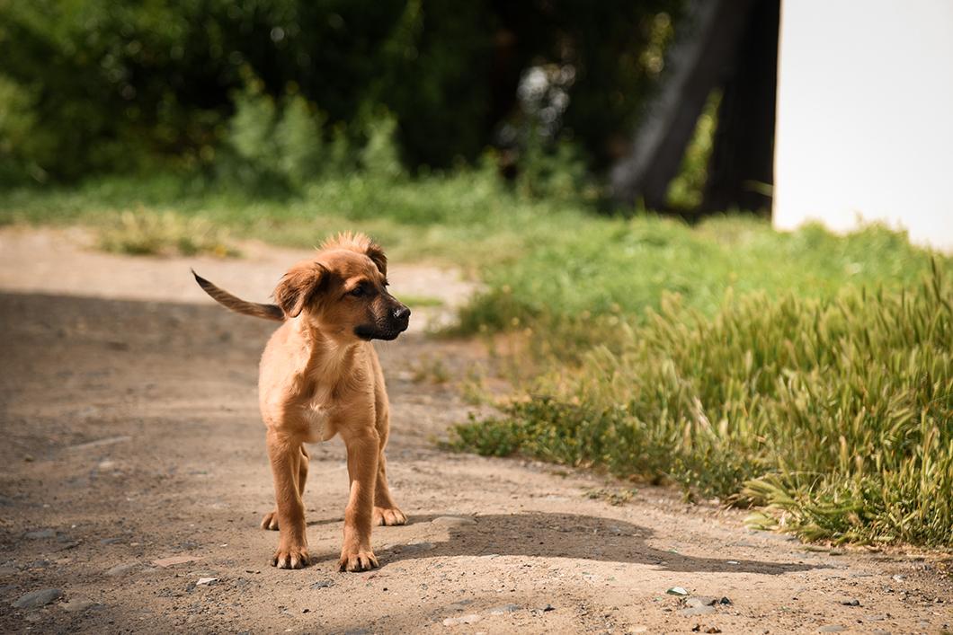 Les chiens de EL Calafate en Patagonie