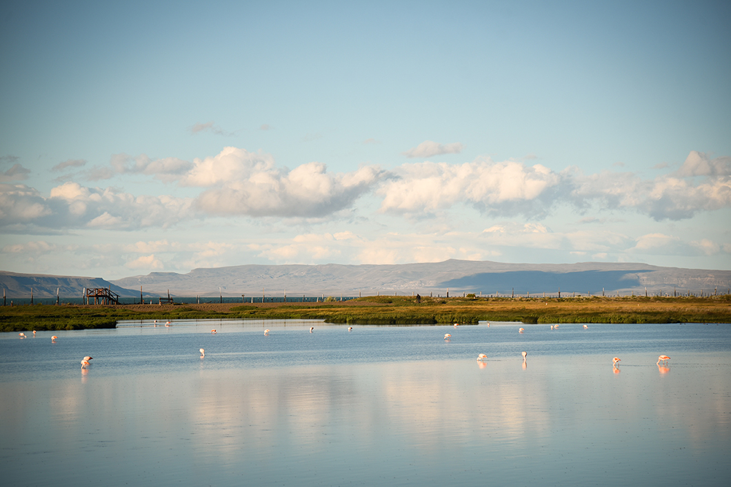 Les oiseaux de Patagonie