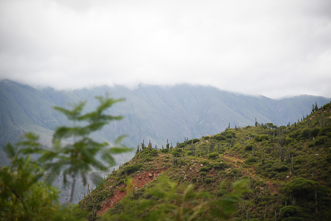 Road trip dans la Quebrada de Escoipe