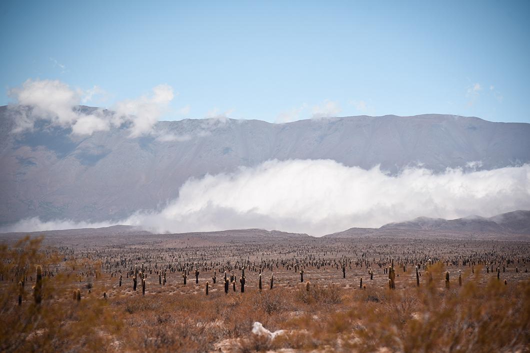 Le Parc National Los Cardones près de Salta