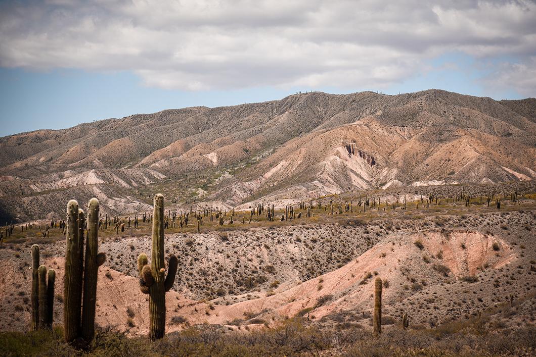 Road trip dans le Parc National Los Cardones