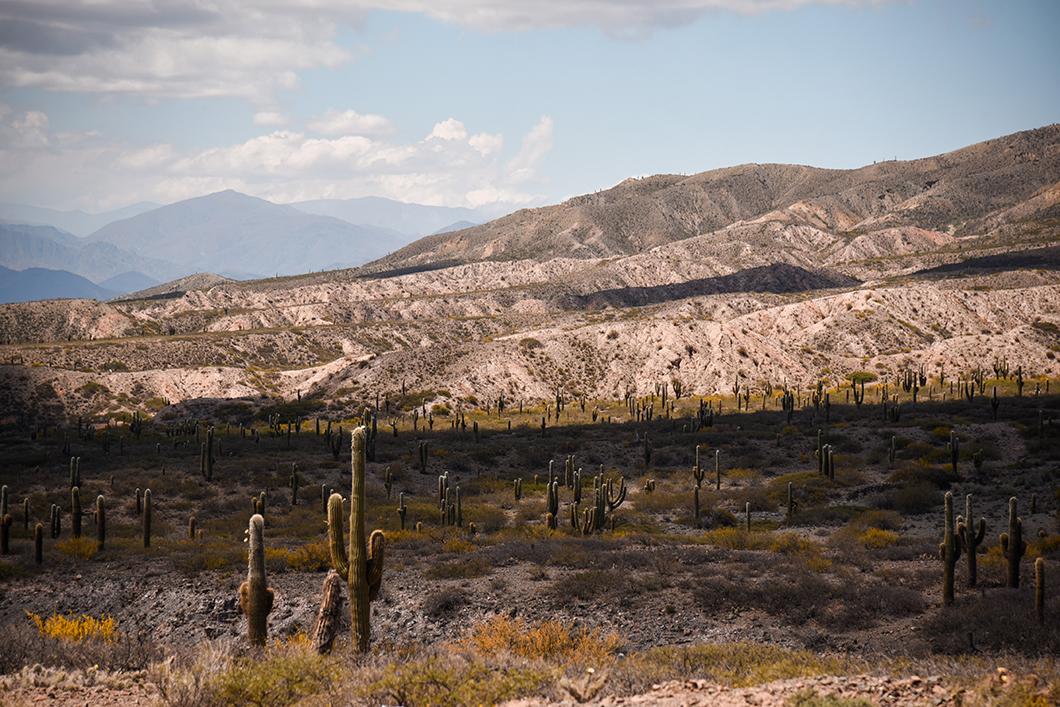 Les paysages du Parc National Los Cardones