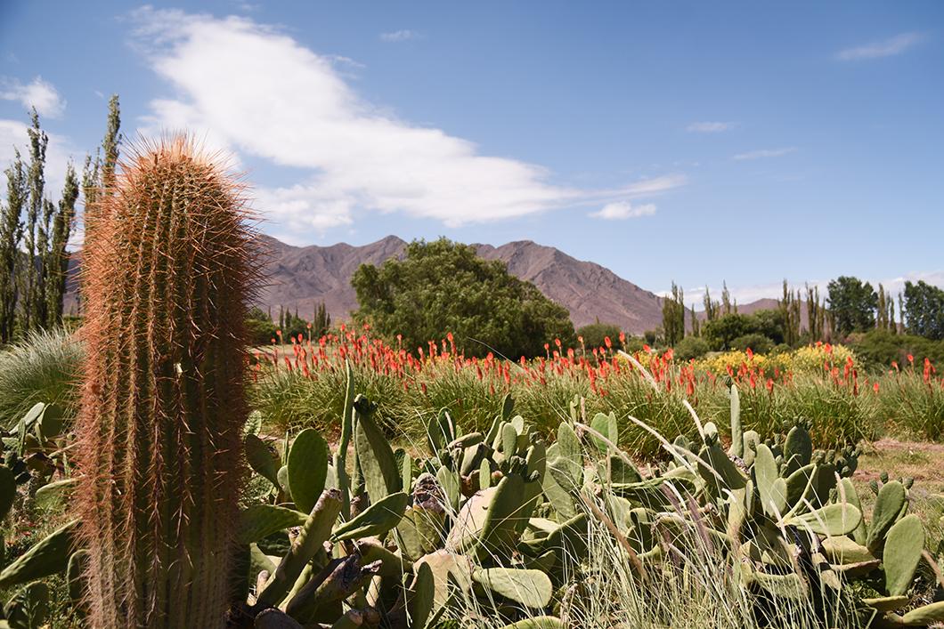 Jardin de l'Hôtel à La Merced Del Alto