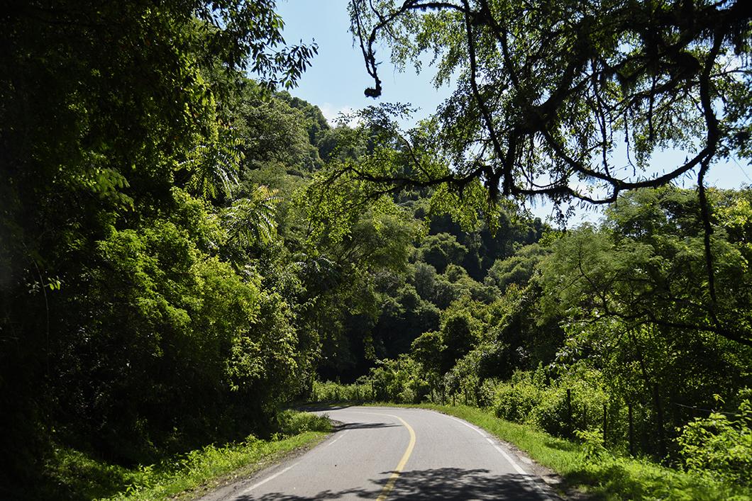 Les forêts sub-tropicales de la Caldera