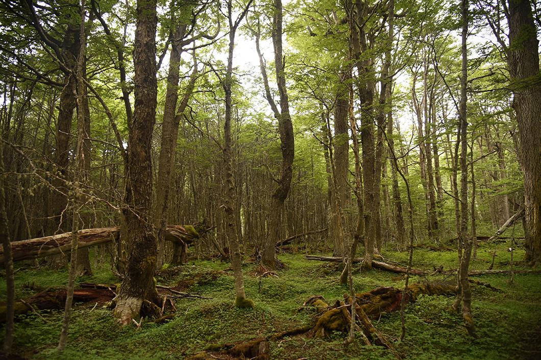 Forêt de la randonnée à la Laguna Esmeralda