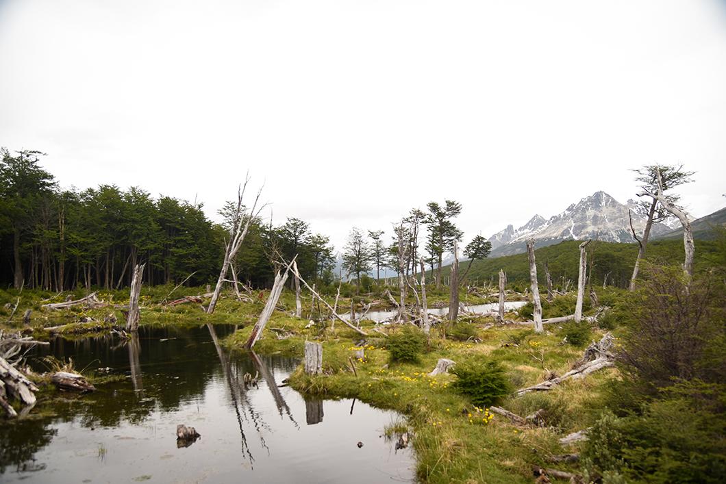 Marche jusqu'à la Laguna Esmeralda à Ushuaia